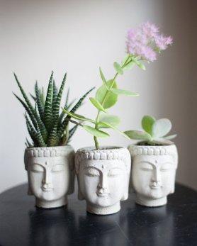 buddha plant